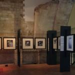 Foto 22 - mostra-De Arte Venandi-Federico II - Bari