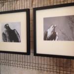 Foto 24 - mostra-De Arte Venandi-Federico II - Bari
