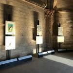 Foto 3 - mostra-De Arte Venandi-Federico II - Castel del Monte