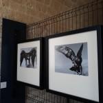Foto 30 - mostra-De Arte Venandi-Federico II - Trani