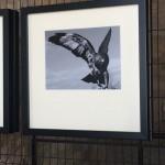 Foto 36 - mostra-De Arte Venandi-Federico II - Trani