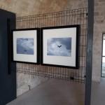 Foto 37 - mostra-De Arte Venandi-Federico II - Trani