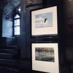 Foto 5 - mostra-De Arte Venandi-Federico II - Castel del Monte